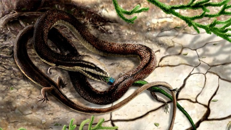 Fotos: descubren una serpiente prehistórica con cuatro patas