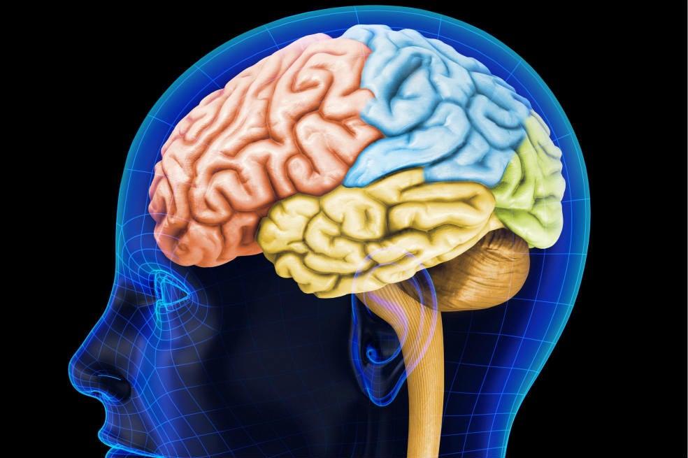 ¿Cuánta información cabe en el cerebro?