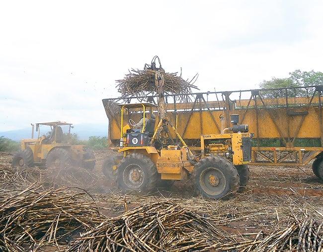 Sequía bajará la producción de hasta 500 mil quintales de azúcar el próximo año