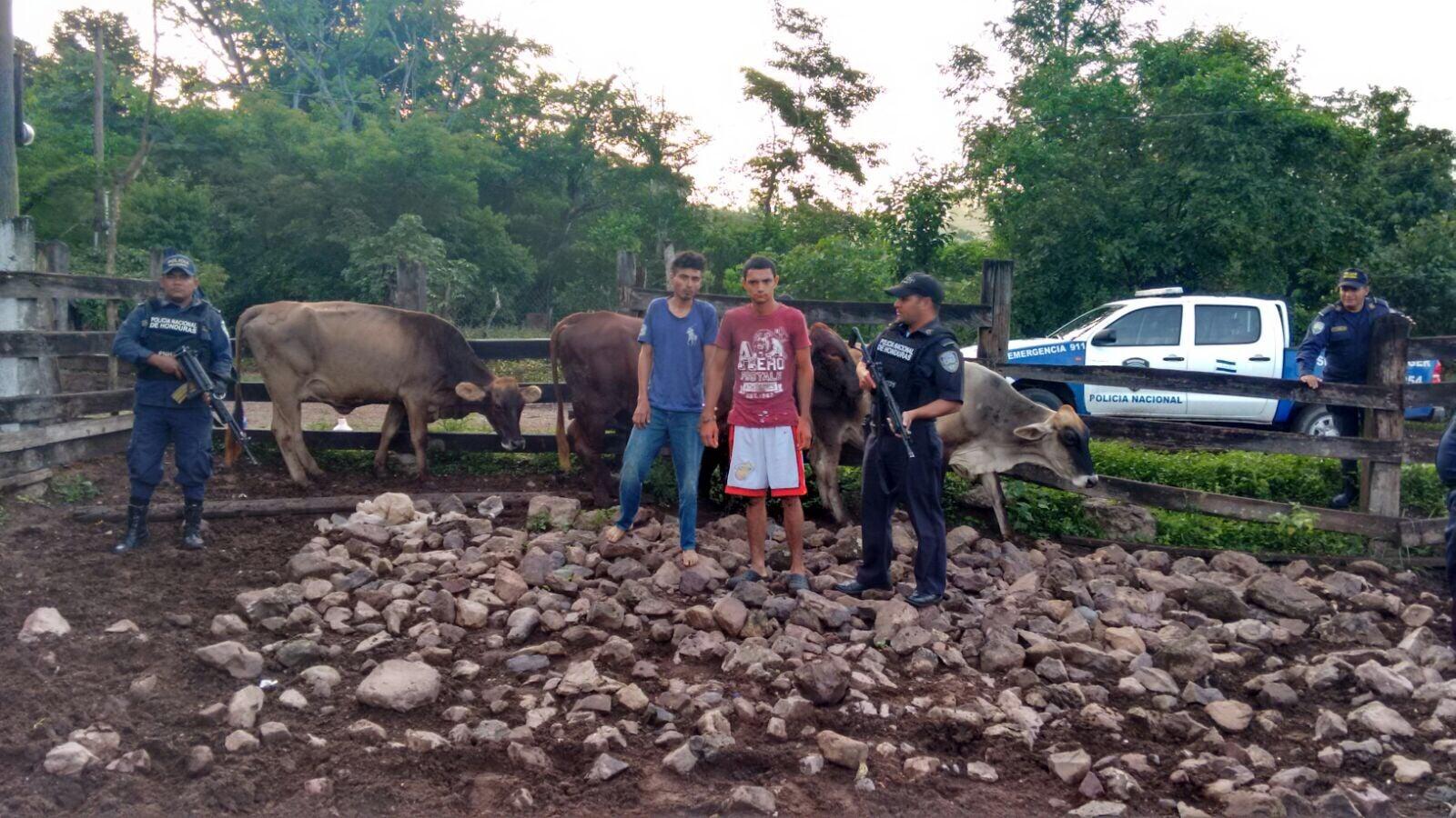 Acusados de robar ganado; las vacas las mantenían en un corral en Yoro