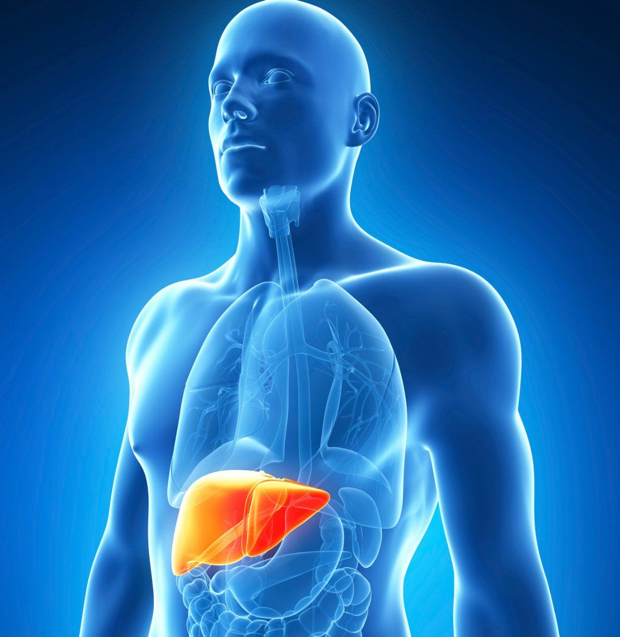 Cuidado con la hepatitis C, es silenciosa y puede terminar en cáncer