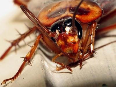 Un zoo japonés intenta renovar la imagen repugnante de las cucarachas