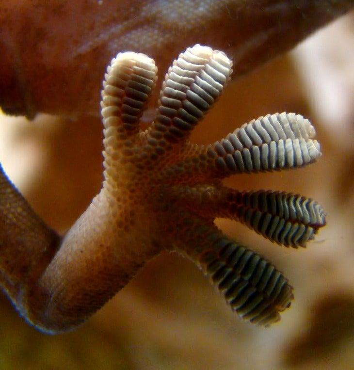 Tecnología de punta… manos de gecko ¿Lo usarías?