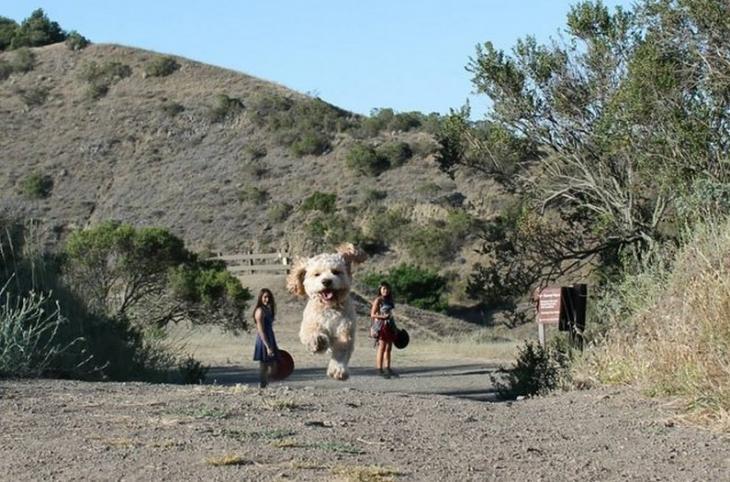 Fotos fantásticas de perros gigantes que invaden la tierra