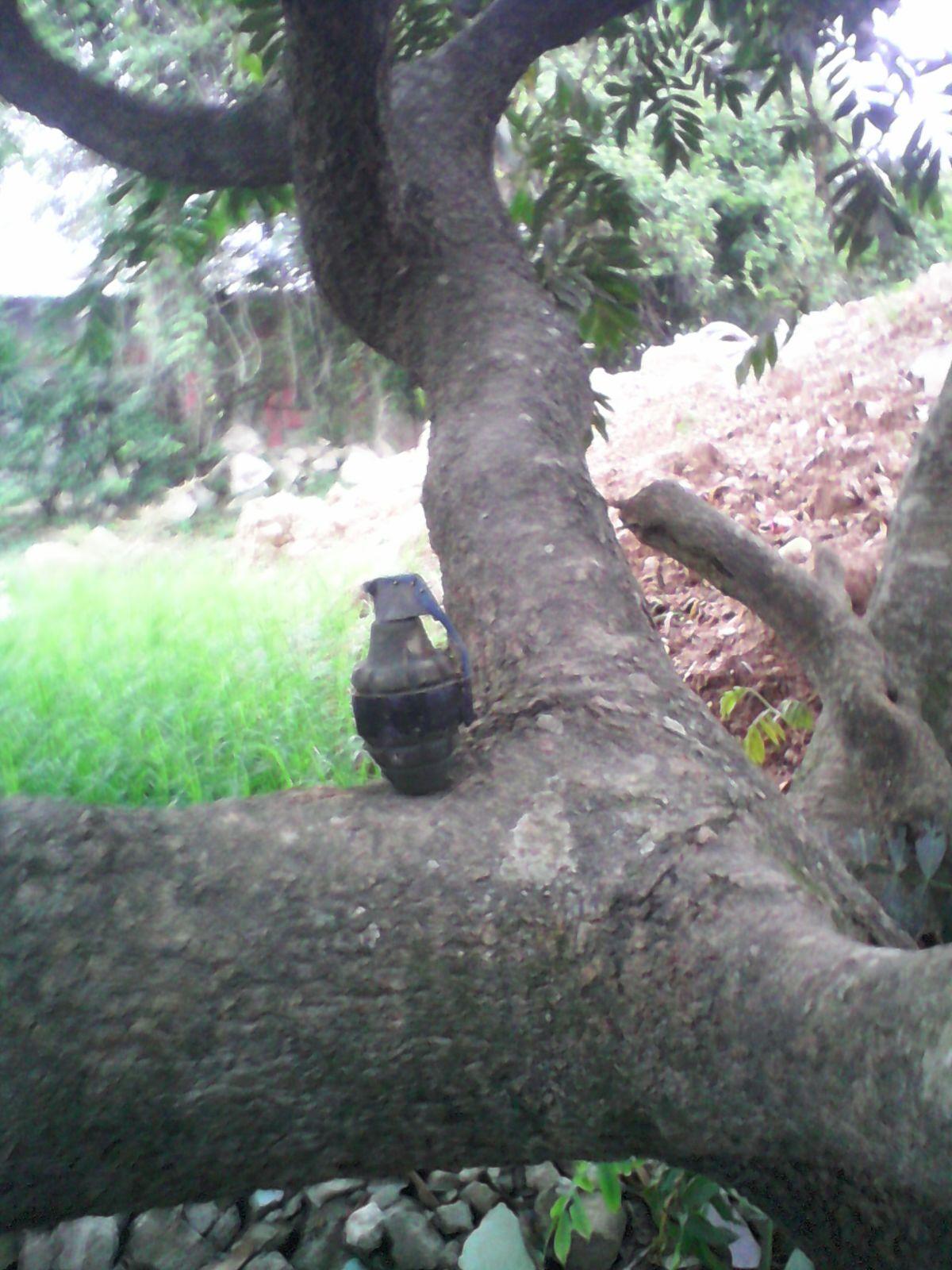 Honduras: Encuentran granada en la rama de un árbol en un solar baldío