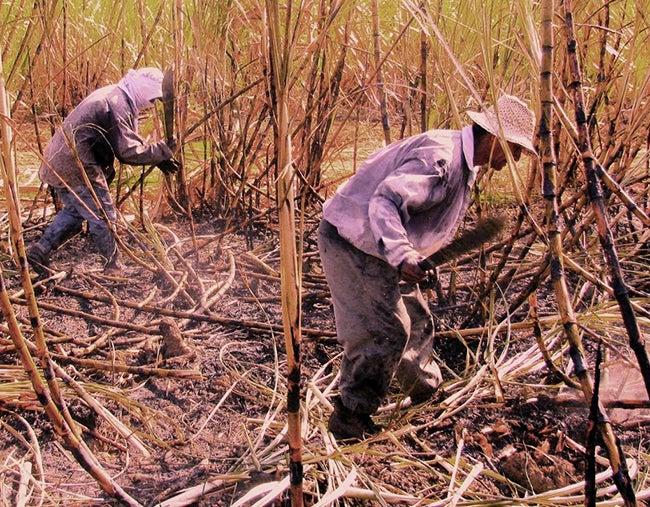Honduras: Sequía puede acabar con los cañaverales