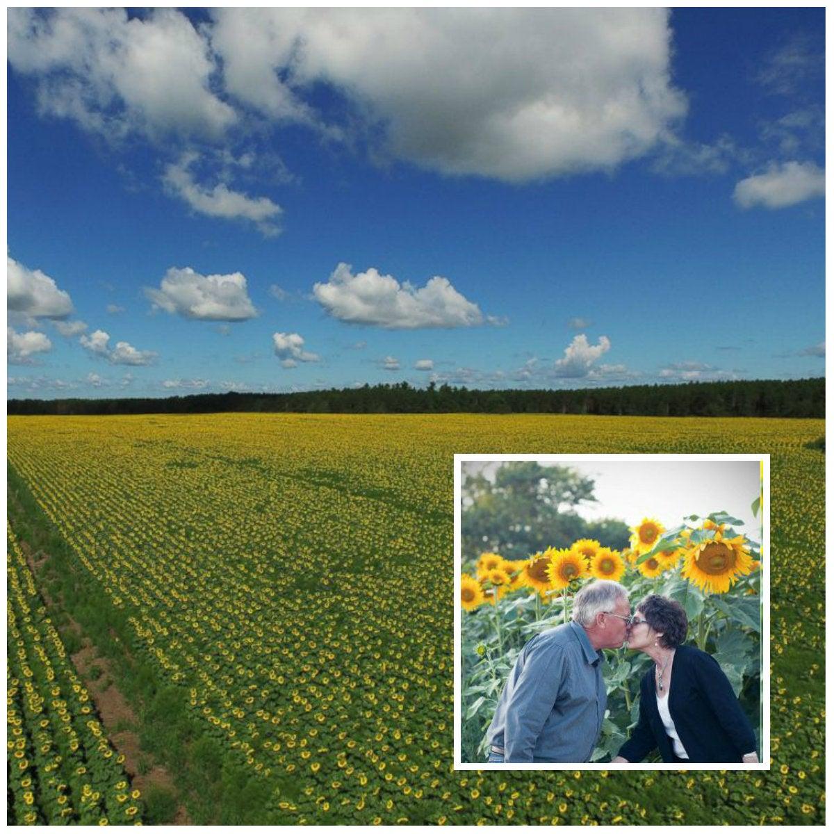 Planta seis kilómetros de girasoles en honor a su esposa fallecida