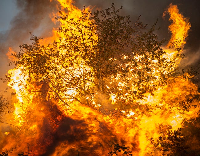 2.000 hectáreas de bosque devora incendio en Galicia