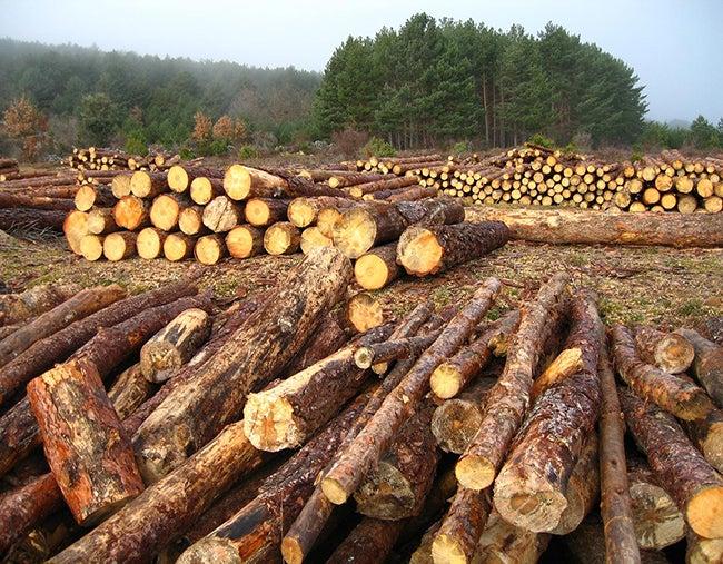 Aprovechamiento ilegal: Medidas sustitutivas a campesinos por tala