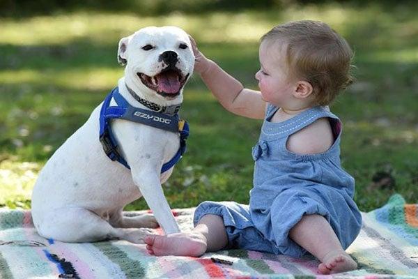 La conmovedora amistad entre una niña que tiene un solo brazo y su perro «especial»