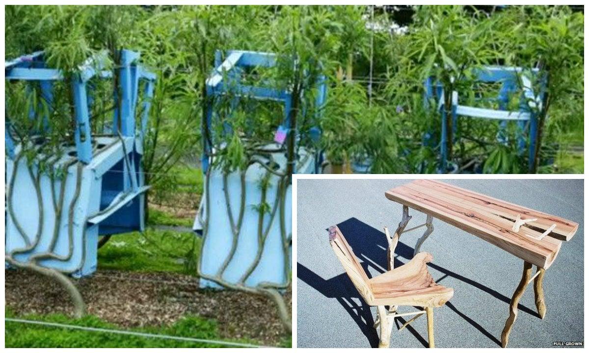 Cosecha mesas, sillas y lámparas que crecen en los árboles sin talarlos