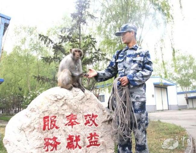 Con monos garantizarán seguridad de desfile militar en China
