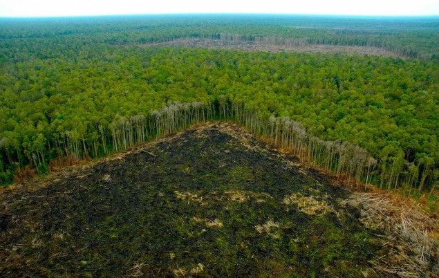 La desaparición de bosques se frenó en los últimos 25 años, según la ONU