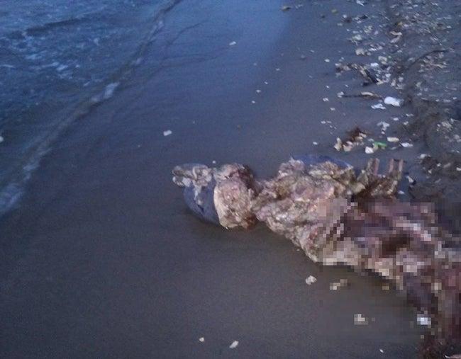 Ambientalistas piden investigar muerte de delfín en playa del norte de Honduras