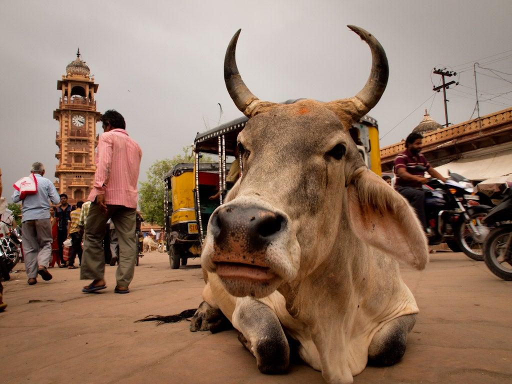 Linchado a muerte en India un musulmán acusado de comer carne de vaca