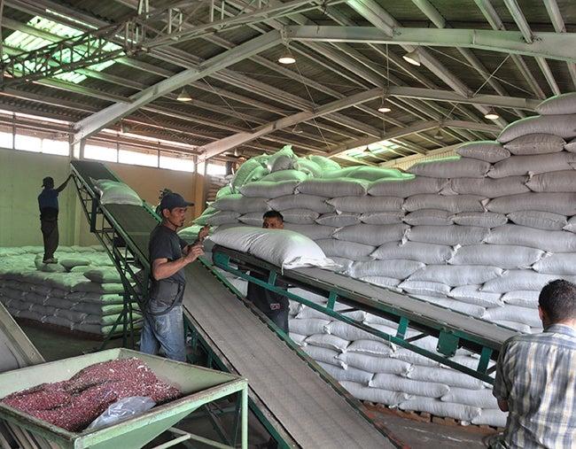 A pesar de la sequía: Gobierno descarta más importación de granos