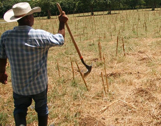 100 mil bolsas alimenticias para enfrentar la sequía en Honduras