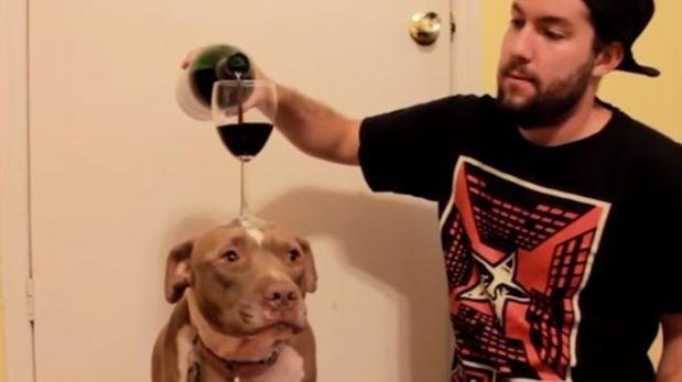 VIDEO: Perra sabe mantener una copa de vino en su cabeza