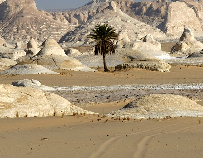 VIDEO: Con ataque aéreo mataron a turistas mexicanos en Egipto y México exige investigación