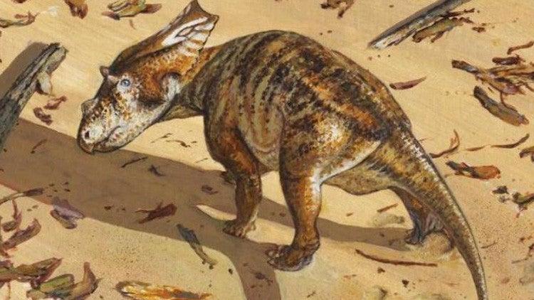 Esqueleto de dinosaurio 'bebé' de 75 millones de años entusiasma a científicos