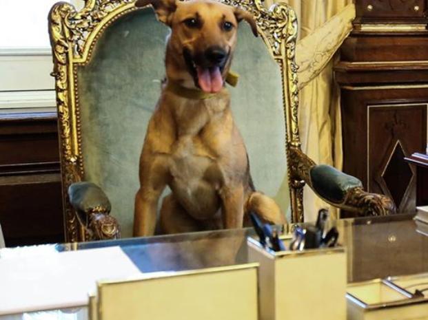 Balcarce, el primer perro que llega al sillón presidencial de Argentina