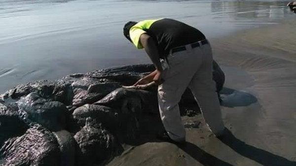 VÍDEO: Un 'monstruo' emerge del mar en la costa de México