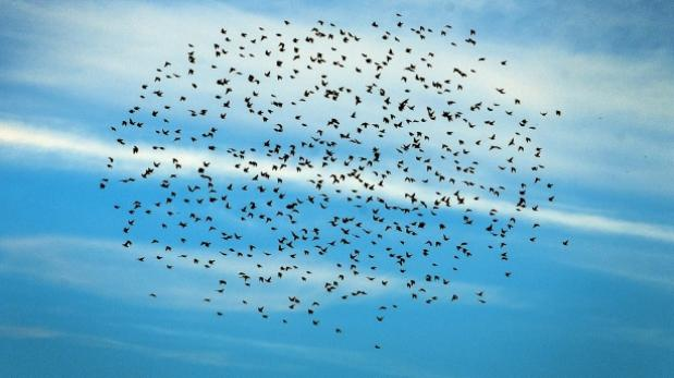 Los pájaros que vuelan 60 horas para cruzar el Sáhara