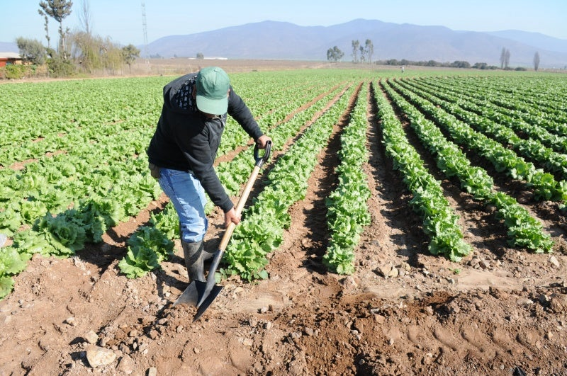 Cooperación Andaluza aprueba presupuesto para proyectos de agricultura en Honduras