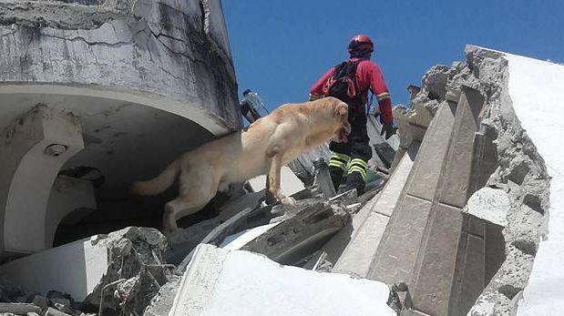 Ecuador: Dayko, el perro que salvó siete vidas antes de perder la propia