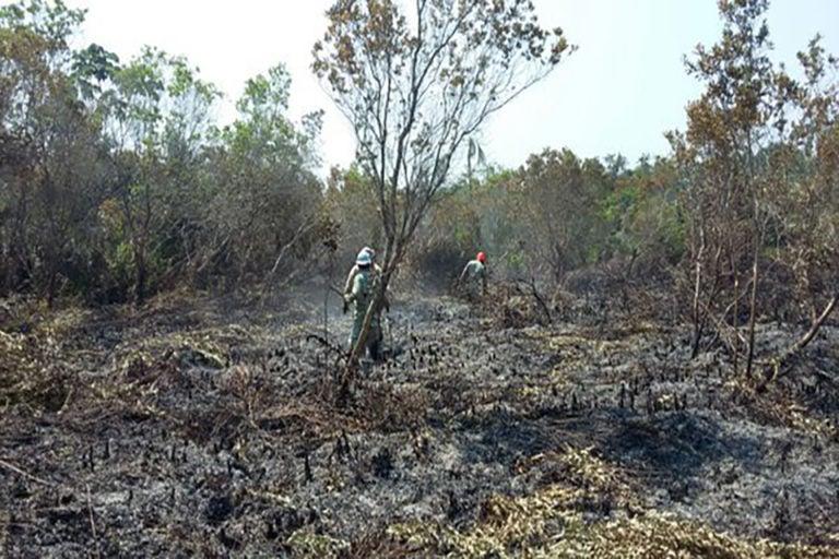 Parque Jeannette Kawas: Sigue la investigación del incendio