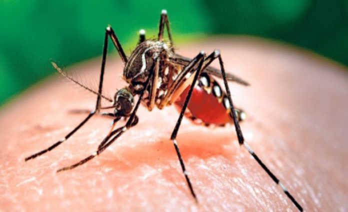 Día oficial de la lucha contra el mosquito