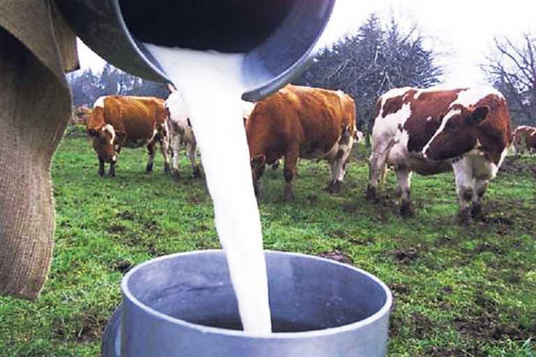 Honduras es el tercer productor de leche en Centroamérica