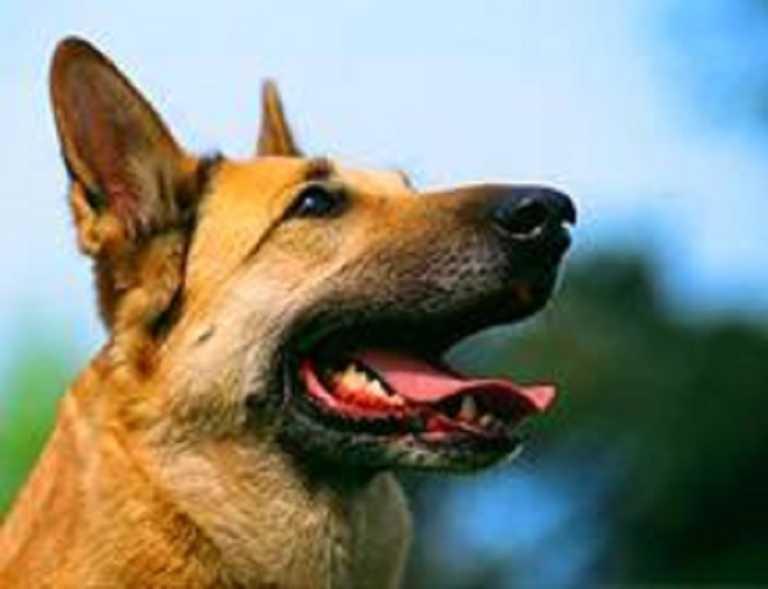 ¿Cuántas palabras humanas logra entender un perro?