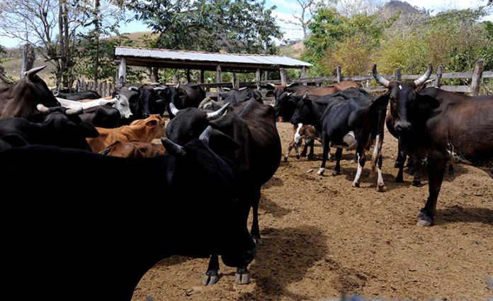 La exportación de carne