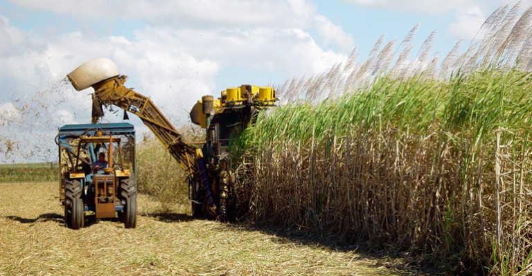 Proyectan 11.8 millones de quintales de azúcar para zafra 2016-2017