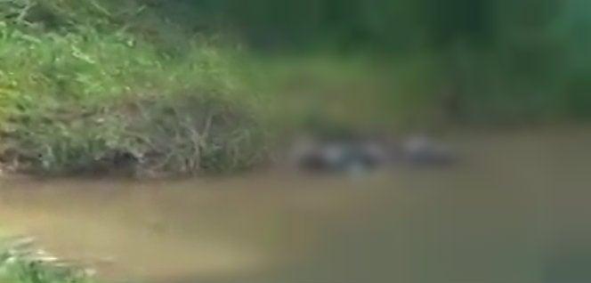 Dos cadáveres más: Uno en el sector Caimán y otro en Chamelecón