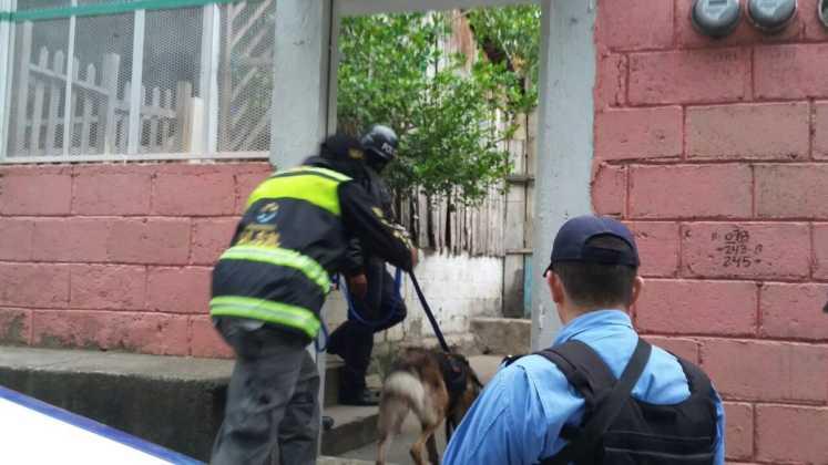Escuadrón Canino de la @DLCNMPHN lidera allanamientos en Comayagua y Lejamaní en busca de droga e indicios de delitos