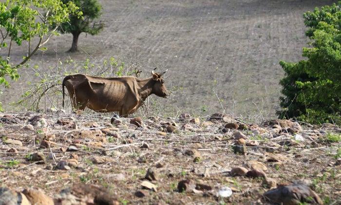 Copeco continúa elaboración de plan para contrarrestar época de sequía