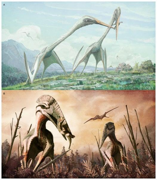 Se alimentaban de dinosaurios. Poseen grandes bocas.