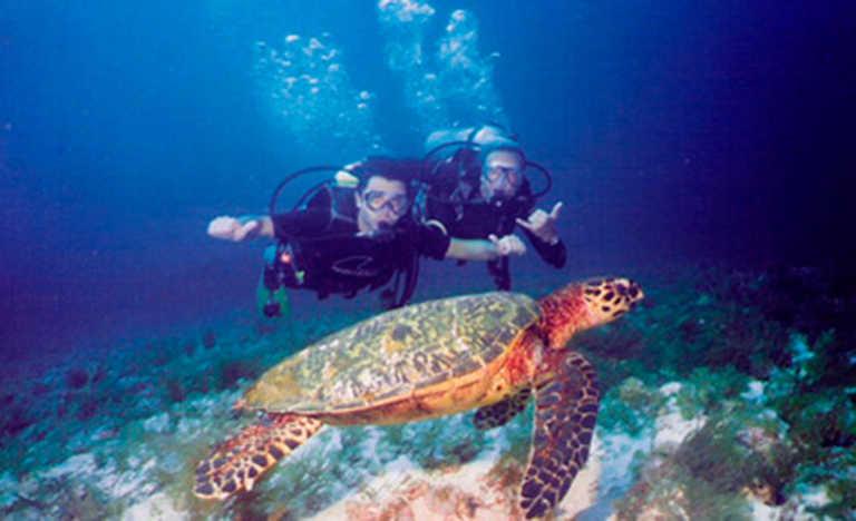 Utila, el mejor sitio para buceo en el Caribe, según USA TODAY