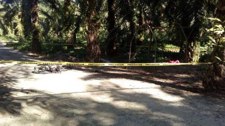 Matan a dos guardias de seguridad en campo bananero de El Progreso