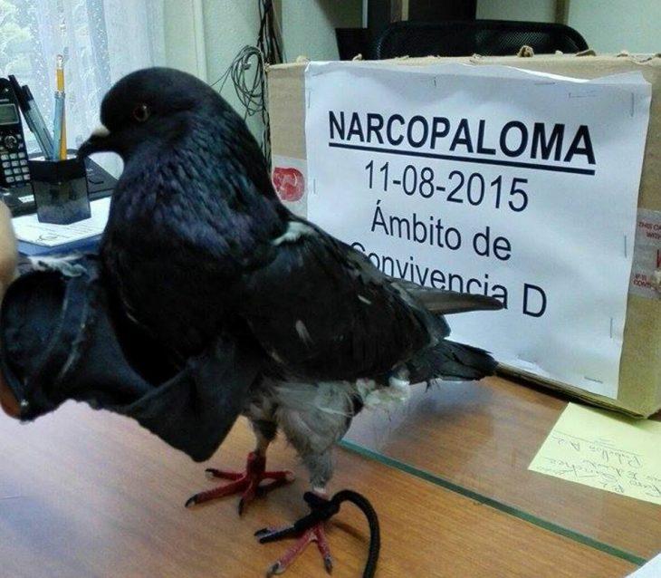 Capturan «Narco Paloma» que llevaba droga en cárcel de Costa Rica