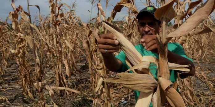 sequía en Honduras