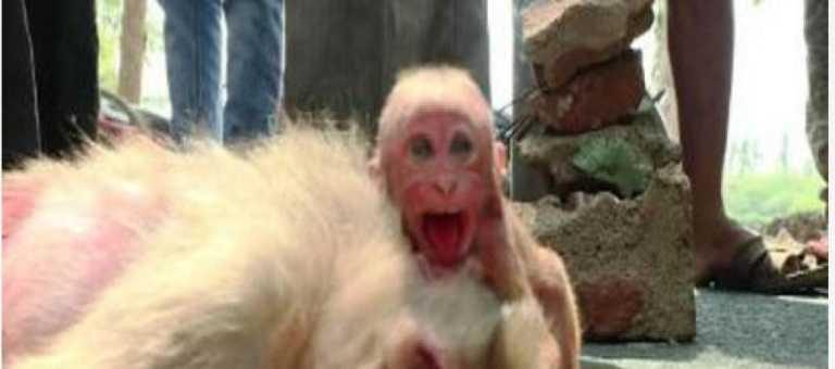 El emotivo vídeo de un bebé mono rompiendo a llorar al ver a su madre muerta en el suelo se vuelve viral