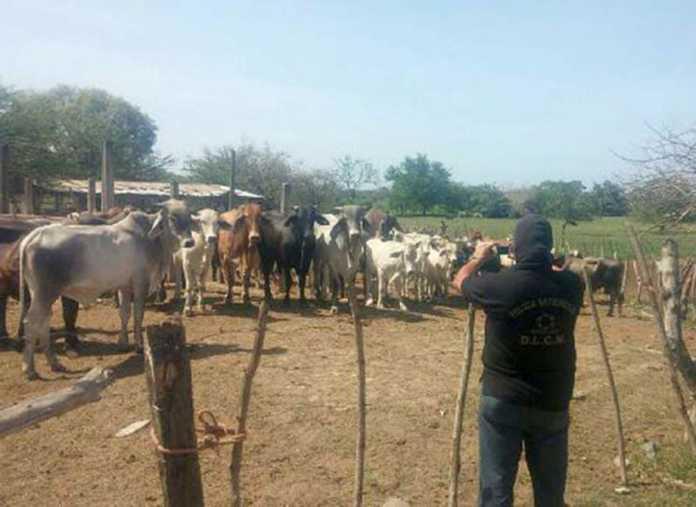 109 cabezas de ganado son entregadas a la OABI