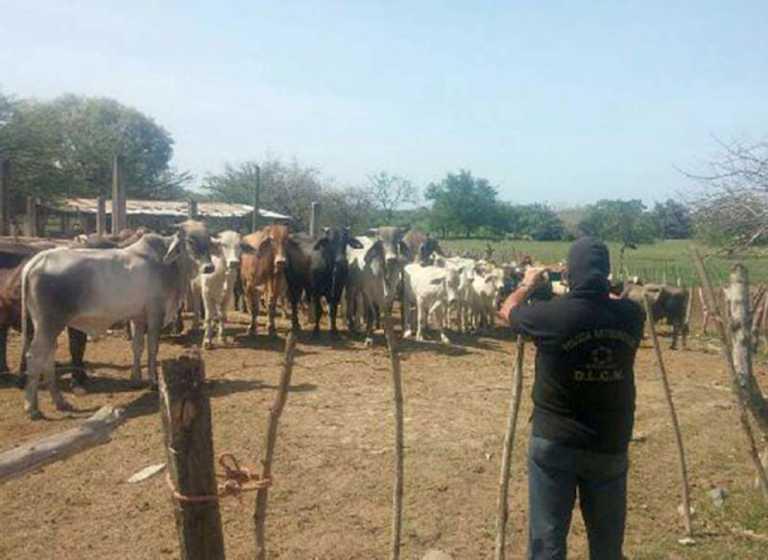 109 cabezas de ganado son entregadas a la OABI en Honduras