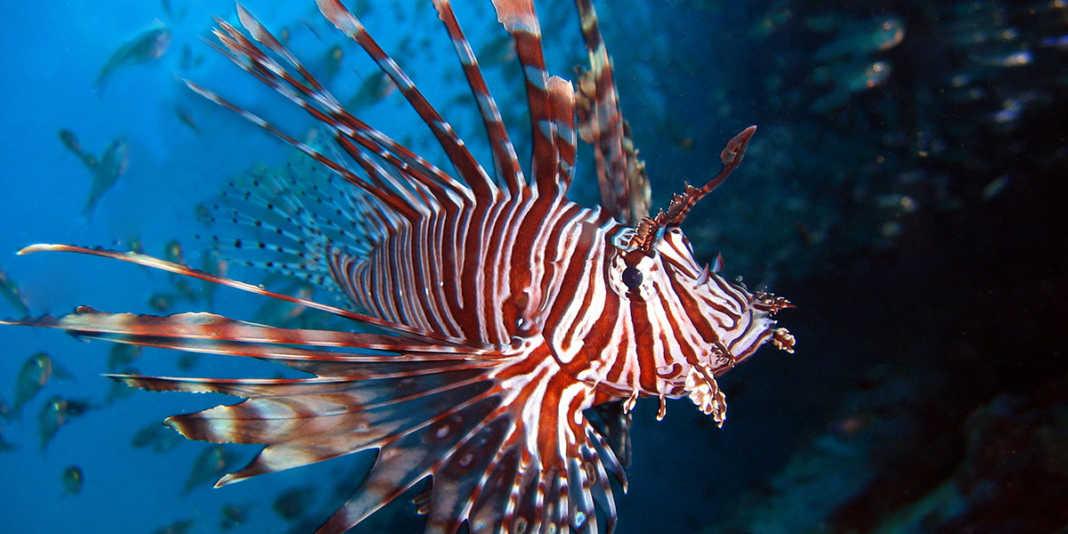 pez león