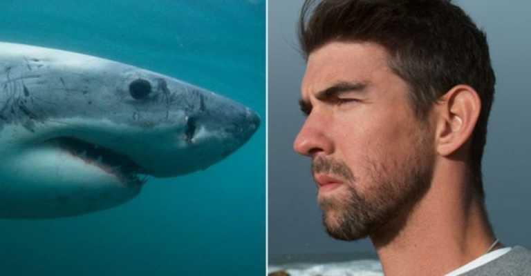 VÍDEO: Michael Phelps pierde en una carrera ante un tiburón blanco