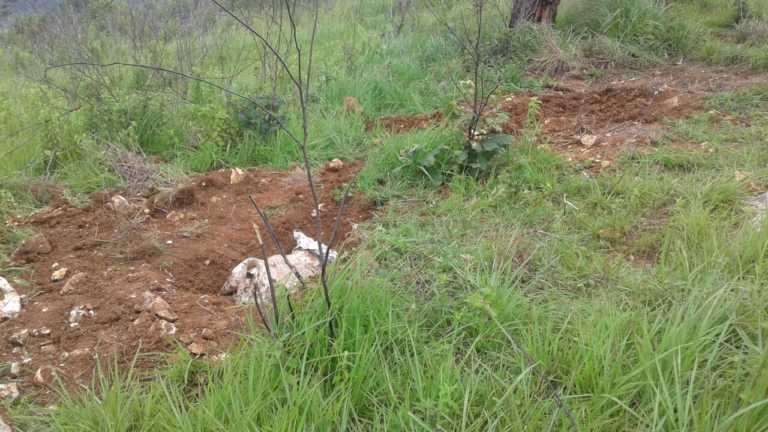 Comayagüela: Tres cadáveres exhumaron en cementerio clandestino
