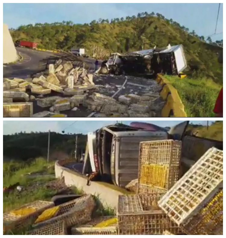 Decenas de polluelos perdieron la vida en el accidente que se suscitó el pasado jueves en la carretera CA-5.